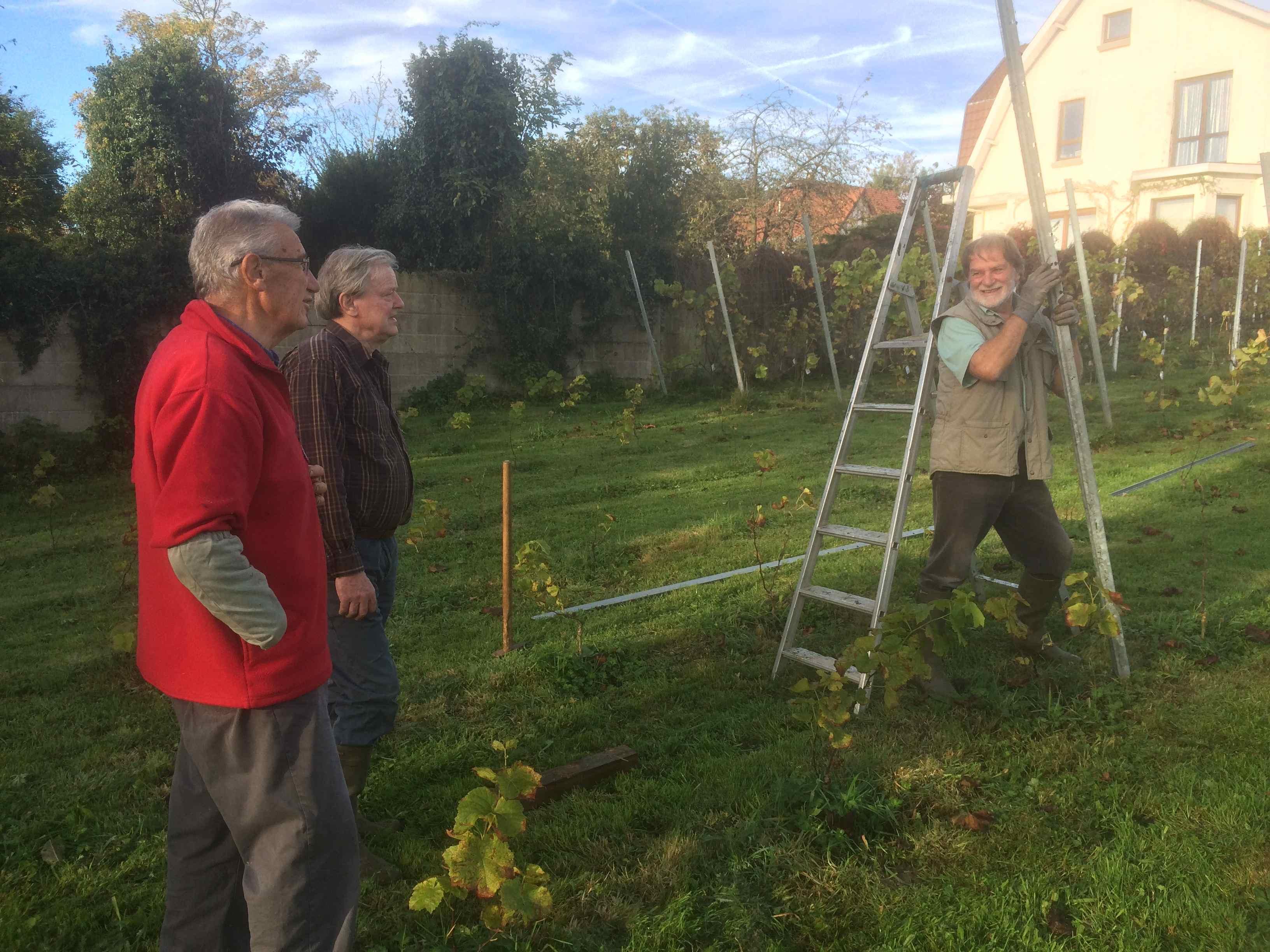 Apr s la vigne il faut planter les piquets vins de genval - Quand faut il tailler la vigne ...