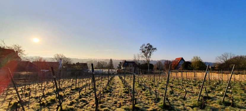 Les photos d'un vignoble confiné